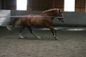 Dressyrutbildning av häst IMG_4608