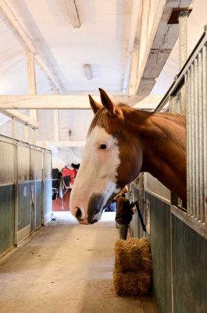 uppstallning av häst